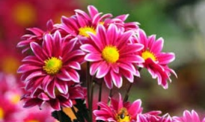 Summer Flowers are available through Florists in Ellon